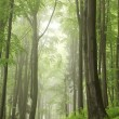 Misty spring forest — Stock Photo #26626455
