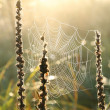 Spider web at dawn — Stock Photo