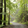 Forest trail — Stock Photo #31966521