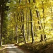 Path in autumnal forest — Stock Photo