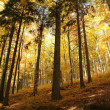 Stock Photo: Picturesque autumn forest