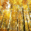 Majestic beech forest  — Stock Photo