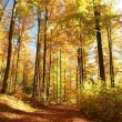 Autumn forest with most of alders — Stock Photo