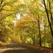 Country road leading through the autumn forest — Stock Photo