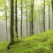 Spring beech forest in the fog — Stock Photo #46409299