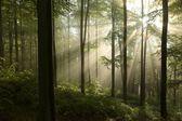 Spring beech forest at dawn — Foto de Stock