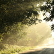 Country road at dawn — Stock Photo #46901413