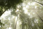 春天落叶森林 — 图库照片