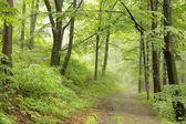 Lente bladverliezende wouden — Stockfoto