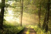 Printemps forêt à feuilles caduques à l'aube — Photo