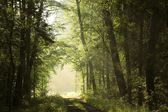 Deciduous forest at dawn — Stockfoto