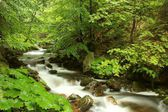 River (Bila Opava) flowing through the forest — Stock Photo