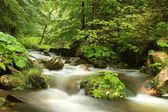 Forest stream flowing through the valley — Stock Photo