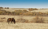 Meadow, hills and lonely horse — Stock Photo