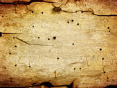 Old wood texture (for background) — Stock Photo
