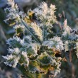 Little Green Leafs covered by Frost — Lizenzfreies Foto