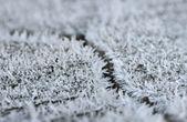 Frost auf ein Stück Holz mit einem Sprung — Stockfoto