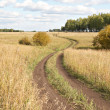 Road in field — Stock Photo #13277578