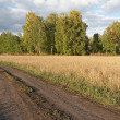 Road in field — Stock Photo #34643783