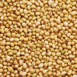 Soy bean background — Stock Photo