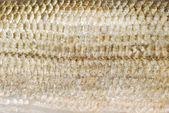 Fish scale texture — Stock Photo