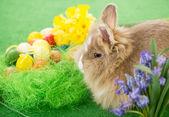 Velikonoční zajíček — Stock fotografie
