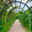 Green archway in garden. Peterghof.St.Peterburg — Stock Photo #12260589