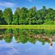 The forest lake, wild landscape. Russia - Stock Photo