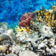 Coral and fish in the Red Sea.Сnidarians.Egypt — Stock Photo