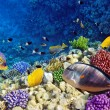Coral and fish in Red Sea.Egypt — Stock Photo #13166334