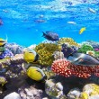 Stock Photo: Coral and fish in Red Sea.Egypt