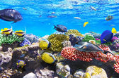 Coral and fish in the Red Sea.Egypt — Foto de Stock