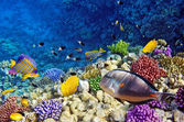 Coral and fish in the Red Sea.Egypt — Photo
