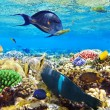 Coral and fish in Red Sea.Egypt — Stock Photo #13612910