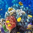 Coral and fish in Red Sea.Egypt — Stock Photo #14017928