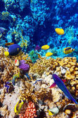 Coral and fish in the Red Sea. Egypt, Africa — Foto de Stock