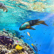 Coral and fish in the Red Sea.Egypt — Stock Photo