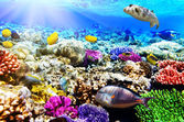 Coral and fish in the Red Sea. Egypt, Africa. — Foto de Stock