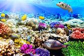 Coral y peces en el mar rojo. egipto, áfrica — Foto de Stock