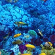 Stock Photo: Coral and fish in Red Sea. Egypt, Africa.