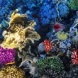 Coral and fish in the Red Sea. Egypt, Africa. - Stock Photo