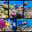 Coral and fish in the Red Sea. Egypt. Collage. — Foto de Stock