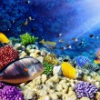 Stock Photo: Coral and fish in the Red Sea.Egypt