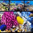Coral and fish in the Red Sea. Egypt. Collage. — 图库照片
