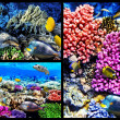 Coral and fish in the Red Sea. Egypt. Collage. — Stock fotografie #21512363