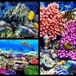 珊瑚和鱼在红海。埃及。拼贴画 — 图库照片