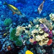 Coral and fish in the Red Sea. Egypt, Africa. — Stock Photo