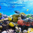 Coral and fish in Red Sea.Egypt — Stock Photo #21512421