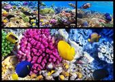 Coral and fish in the Red Sea. Egypt. Collage. — Stock Photo