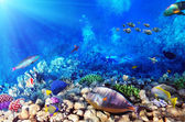 Scuba divers, coral and fish in the Red Sea.Egypt — Stock Photo